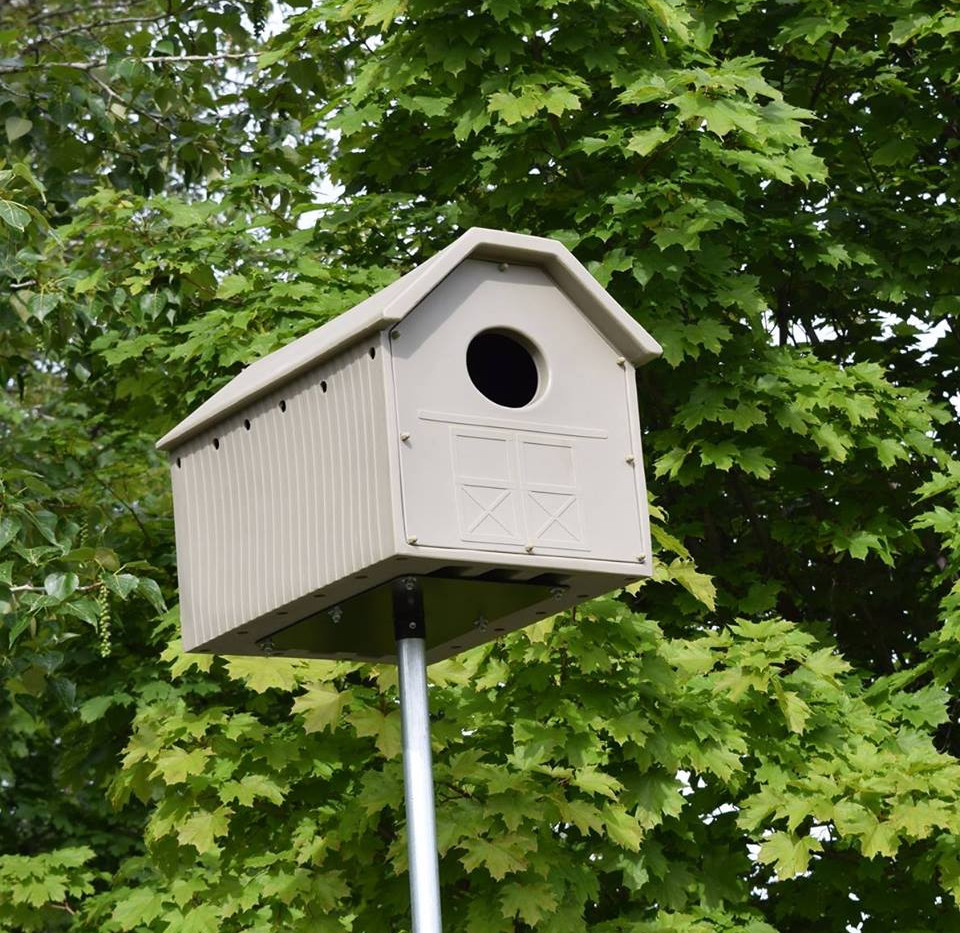 Owl box in the spring