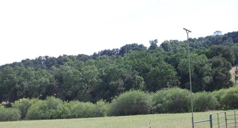 Perch in the field