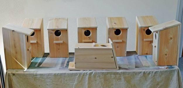 Kestral boxes on display