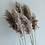 Thumbnail: Dried Pampas grass Bouquet - Real Dried Natural Plants for Boho Decor