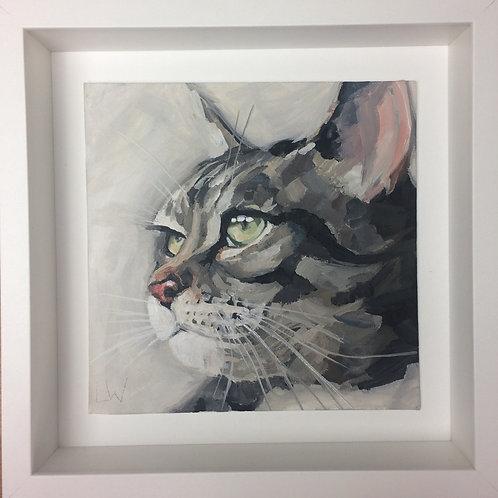 Tabby cat in profile