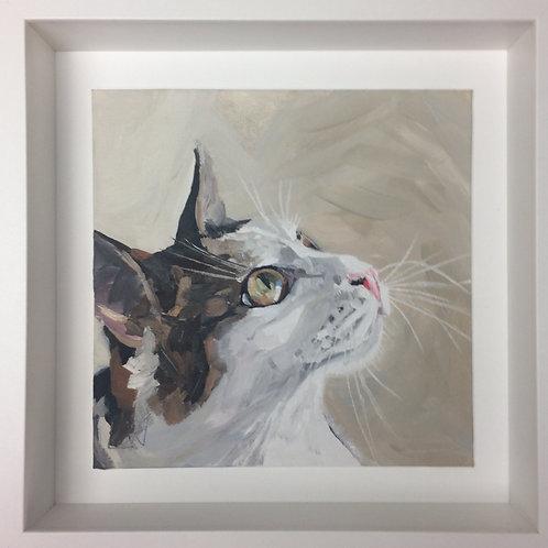 Tabby white cat