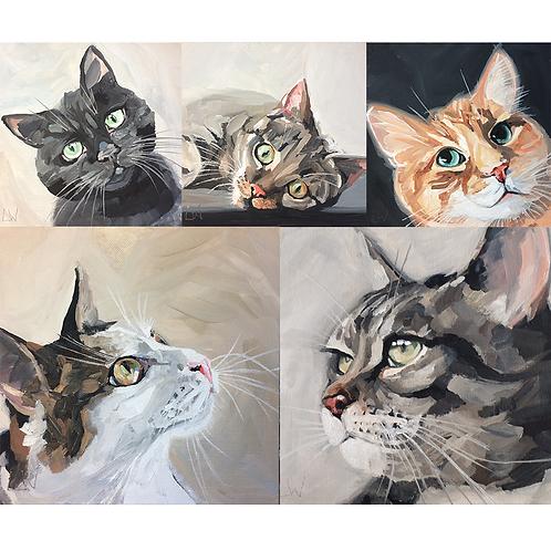 Cat greetings card 5 pack