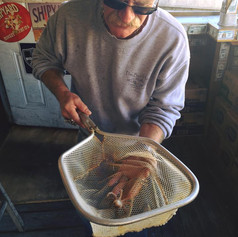Jim Murray with little squid.jpg