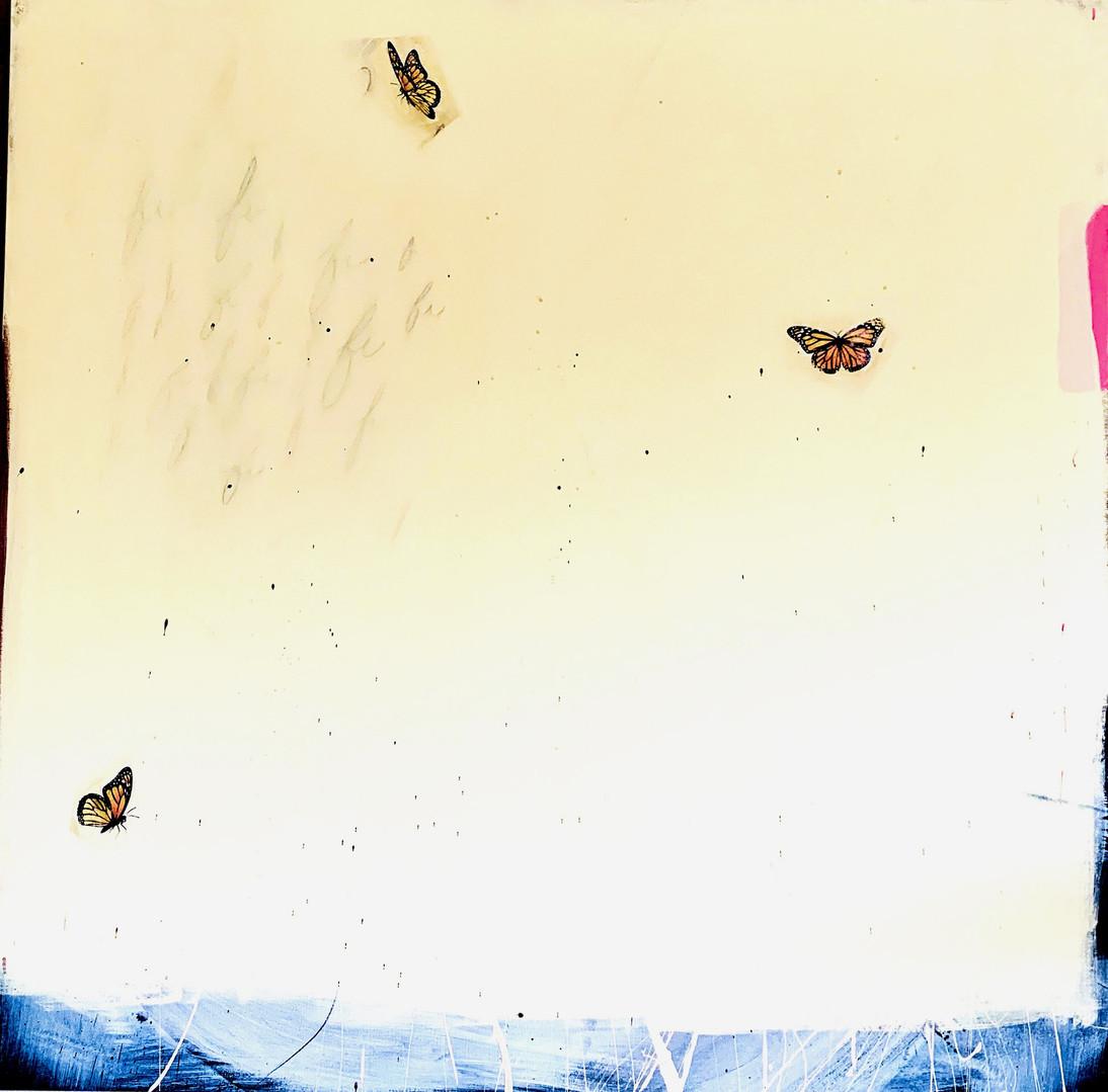 Butterflies at Bird Park