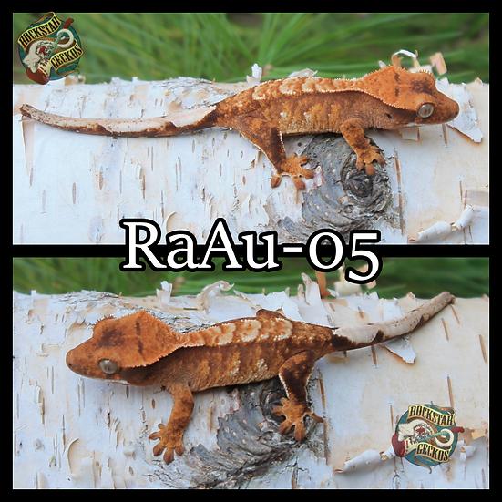 RaAu-05