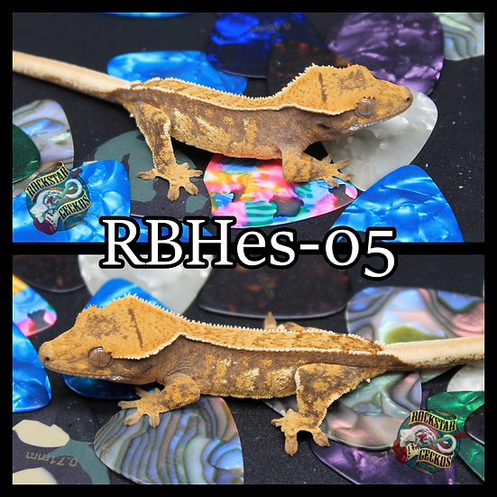 RBHes-05