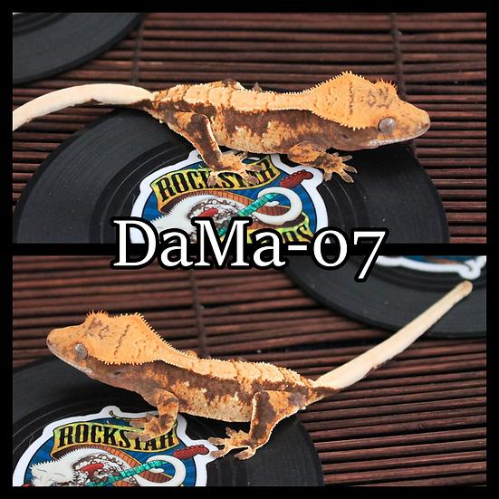 DaMa-07