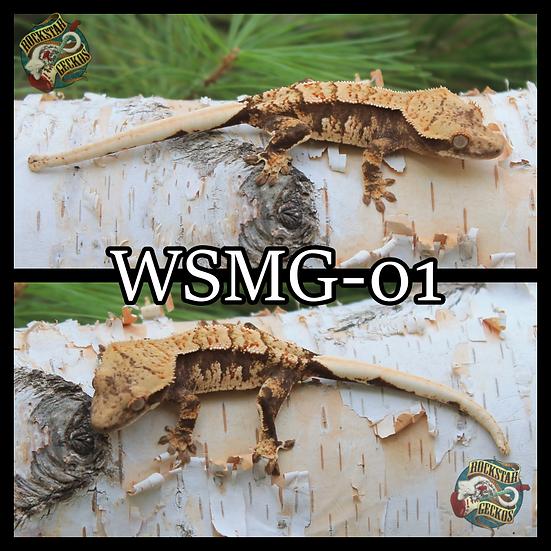 WSMG-01