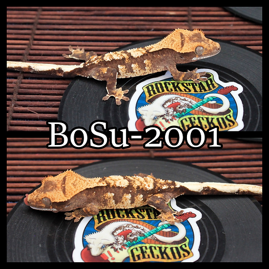 BoSu-2001