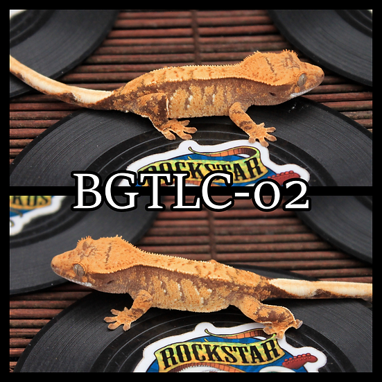 BGTLC-02