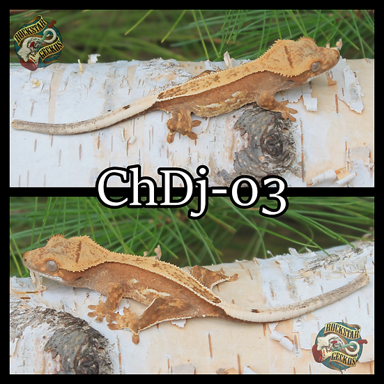 ChDj-03