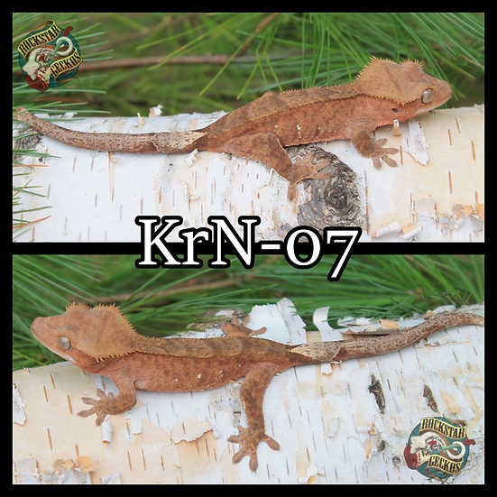 kRn-07