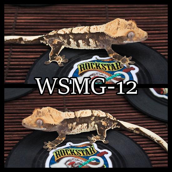 WSMG-12