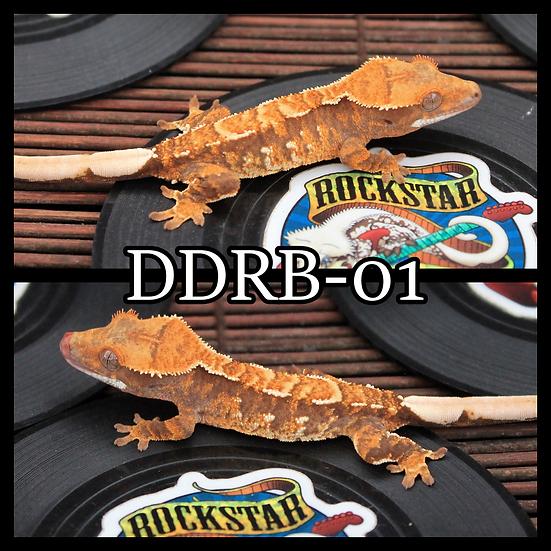 DDRB-01