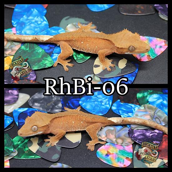 RhBi-06