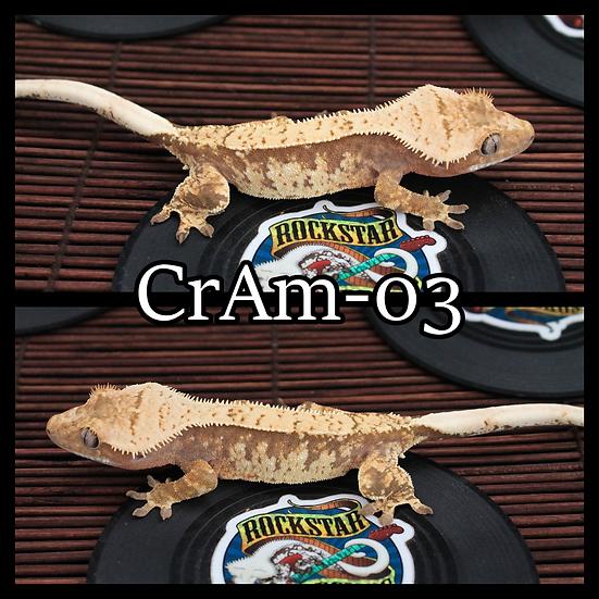 CrAm-03