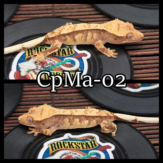 CpMa-02