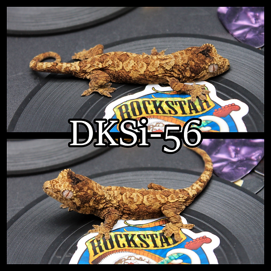 DkSi-56