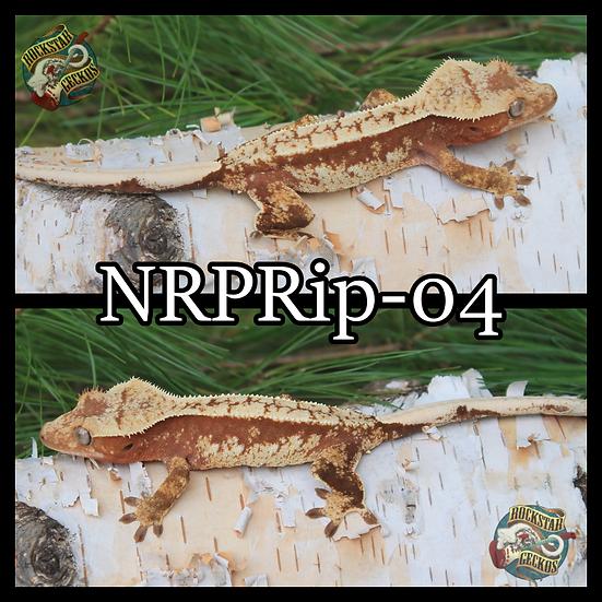 NRPRip-04