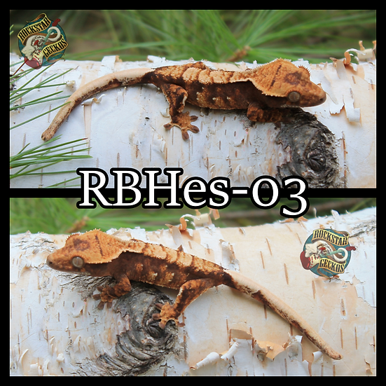 RBHes-03