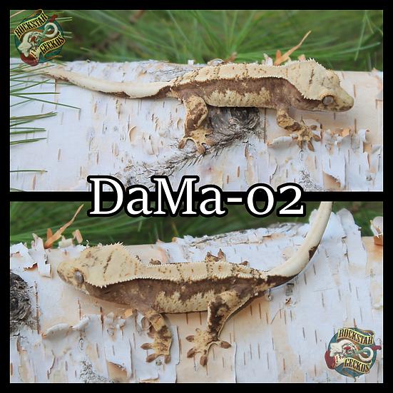 DaMa-02