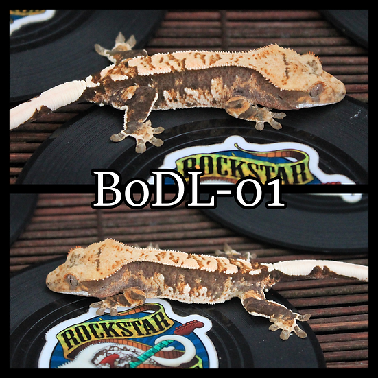 BoDL-01