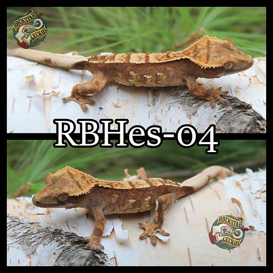 RBHes-04