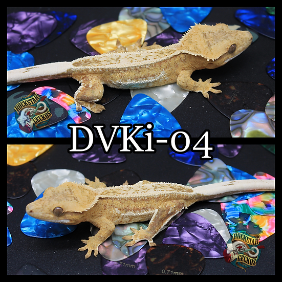 DVKi-04