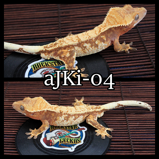 aJKi-04