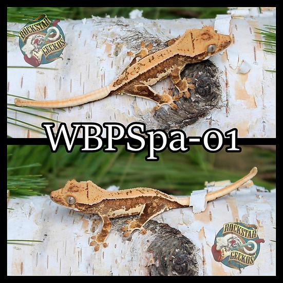 WBPSpa-01