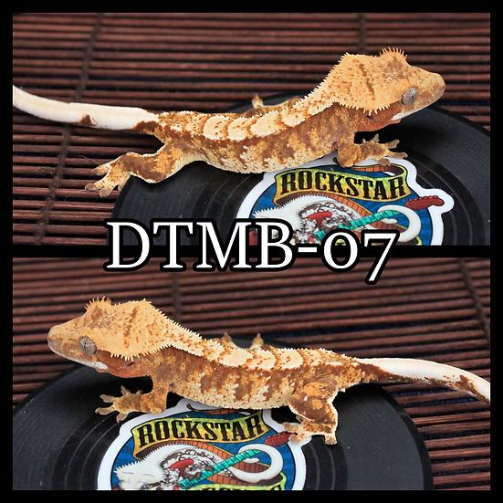 DTMB-07