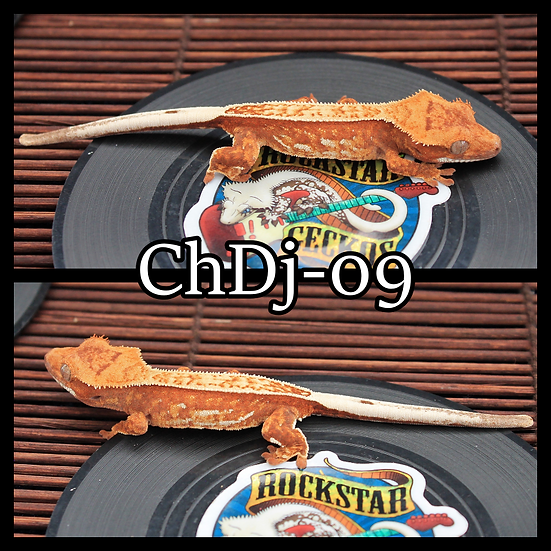 ChDj-09