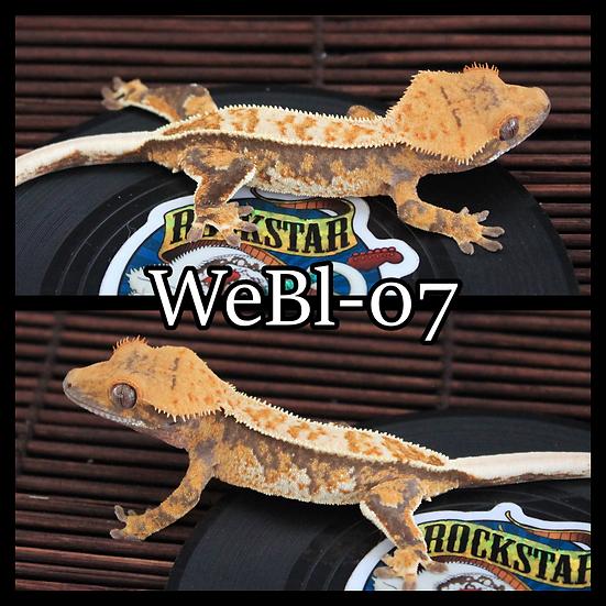 WeBl-07