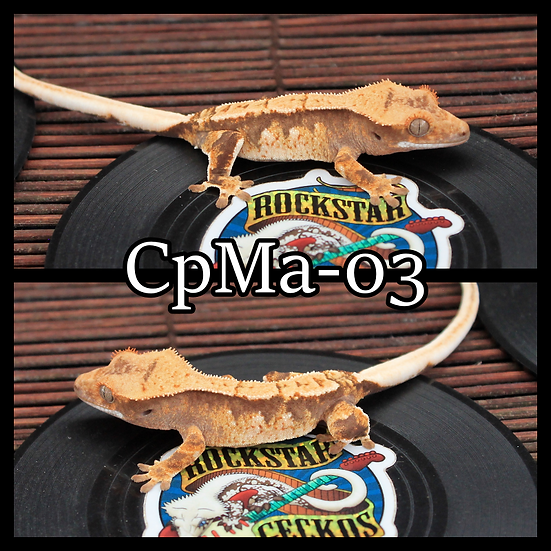 CpMa-03