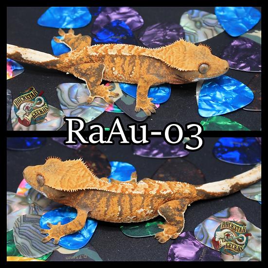 RaAu-03