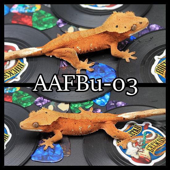 AAFBu-03