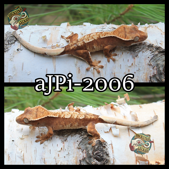 aJPi-2006