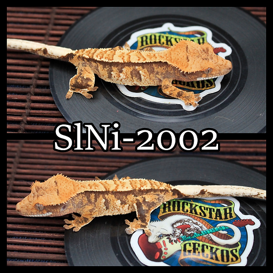 SlNi-2002