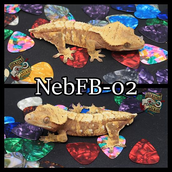 FbNeb-02
