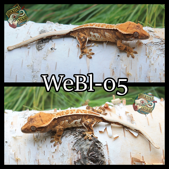 WeBl-05