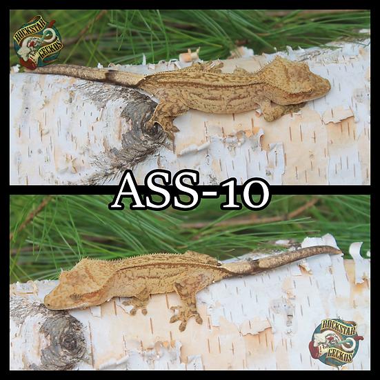 ASS-10