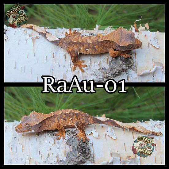 RaAu-01