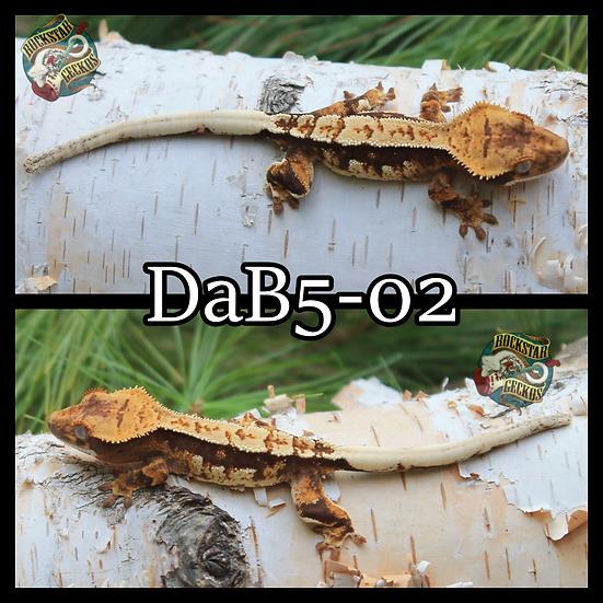 DaB5-02