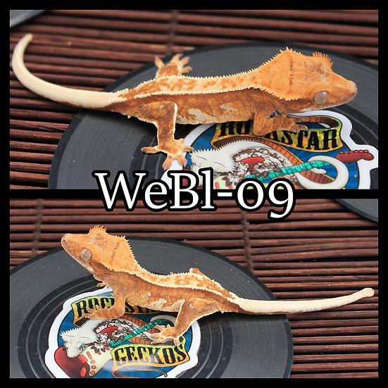 WeBl-09