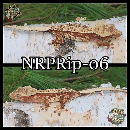 NRPRip-06