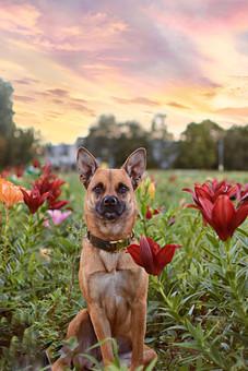 Arya im Blumenfeld - VierPfotenMode