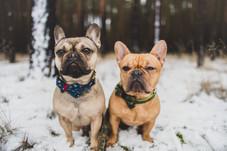 pablo und chester - VierPfotenMode