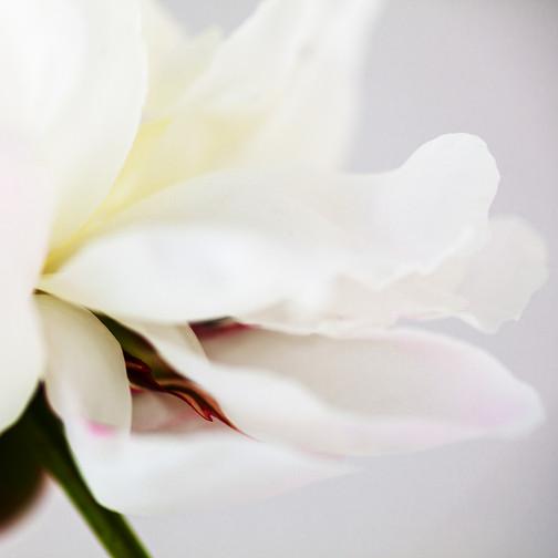 White flutter .jpg