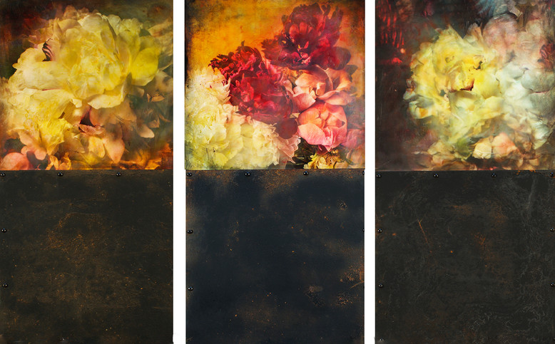 Three Blooming Peonies